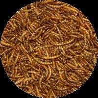 Vivani Meelwormen