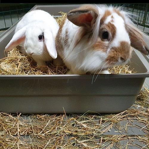 Karel & Lola