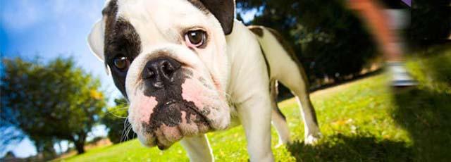 Bij Dierenurnwinkel.nl vindt U altijd een passende asbestemming voor uw dierbare huisdier