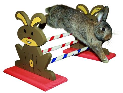 hindernis konijn