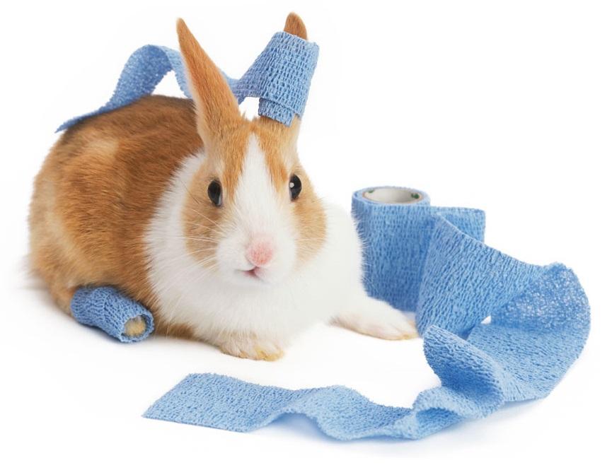 wondzalf voor konijn
