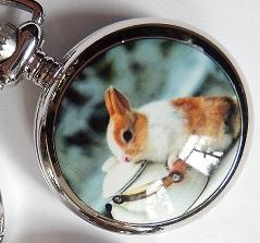 zakhorloge ketel konijn