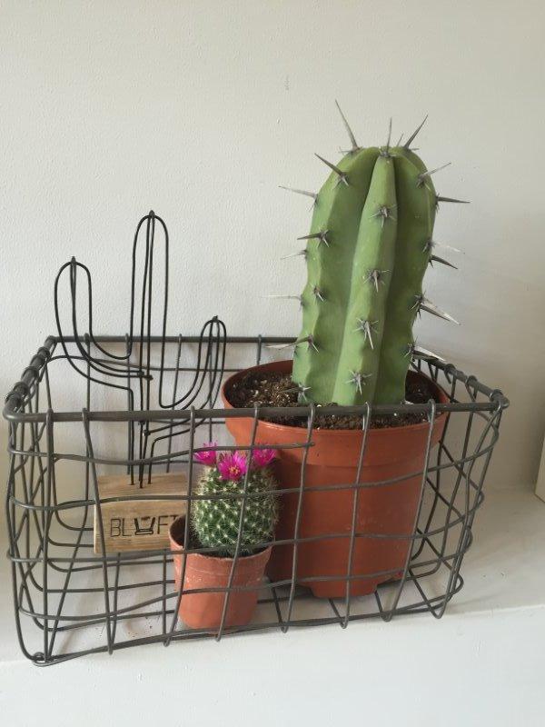 Cactus zwart mini steigerhout