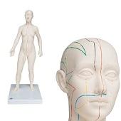 Anatomie model acupunctuur en meridianen (vrouw, 70 cm)