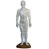 Acupunctuur / meridianen<br/>(man-50 cm)