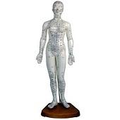 Acupunctuur / meridianen<br/>(vrouw-48 cm)