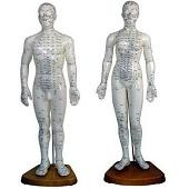 Acupunctuur / meridianen<br/>(man+vrouw)