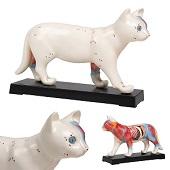 Acupunctuur model kat
