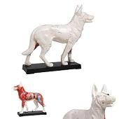 Acupunctuur model hond