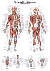 Anatomie poster spieren (Duits/Engels/Latijn, kunststof-folie, 70x100 cm)
