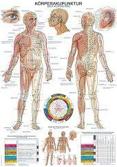 Anatomie poster meridianen (Duits/Engels, papier, 50x70 cm)  + ophangsysteem