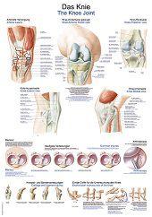 Anatomie poster kniegewricht (kunststof-folie, 70x100 cm)