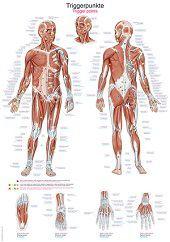 Anatomie poster triggerpoints (Duits/Engels/Latijn, papier, 50x70 cm)  + ophangsysteem