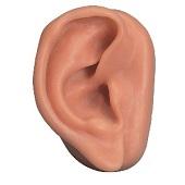 Anatomie model acupunctuur oor rechts