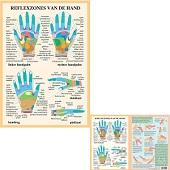 Anatomie poster handreflexologie (Nederlands, gelamineerd, A2 + A4)