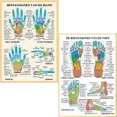 Anatomie posters hand- en voetreflexologie (Nederlands, gelamineerd, A2)