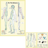 Anatomie poster meridianen (Nederlands, gelamineerd, A2 + A4)