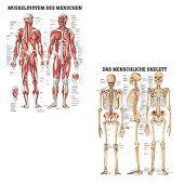 Spieren- en skeletposter<br/>(Duits, gelamineerd, 24x34 cm)