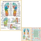 Anatomie poster voetreflexzones (Nederlands, gelamineerd, A2 + A4)