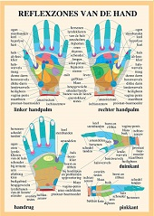 Anatomie poster handreflexologie (Nederlands, gelamineerd, A2)