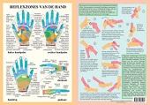 Anatomie poster handreflexologie (Nederlands, gelamineerd, A4)