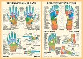 Anatomie poster hand- en voetreflexologie (Nederlands, gelamineerd, A2)
