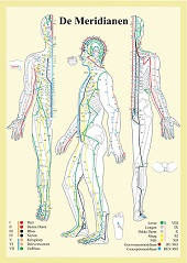 Anatomie poster meridianen (Nederlands, gelamineerd, A2)