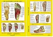Anatomie poster voetskelet en voetspieren (Nederlands, gelamineerd, A4)