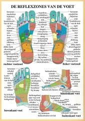Anatomie poster voetreflexologie (Nederlands, gelamineerd, A2)