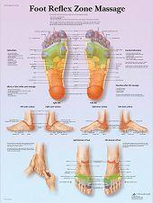 Anatomie poster voetreflexologie (gelamineerd, 50x67 cm)