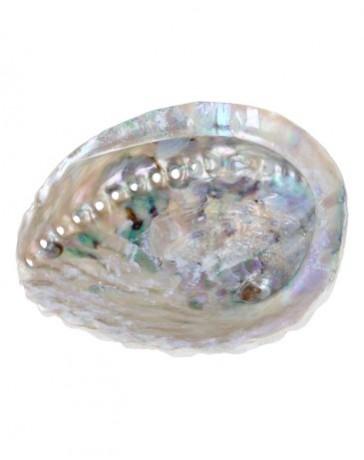 Abalone smudge schelp